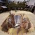 魔幻桌面之立体涂鸦主题 工具 LOGO-阿達玩APP