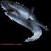 大白鲨 益智 App LOGO-APP試玩