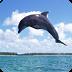 海豚动态壁纸 個人化 App LOGO-硬是要APP