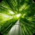 荧光竹林-动态壁纸 工具 App Store-癮科技App