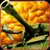 二战前线HD 網游RPG App LOGO-APP試玩