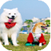 宠物饲养之狗狗篇 生活 LOGO-玩APPs