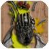 无畏的虫子 益智 App LOGO-硬是要APP