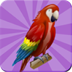 鸟类记忆游戏 益智 App Store-愛順發玩APP