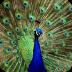 令人惊奇的动物壁纸 個人化 App LOGO-硬是要APP