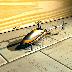 模拟遥控直升机 完整版 動作 App LOGO-硬是要APP