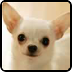 看图猜狗狗 遊戲 App LOGO-硬是要APP