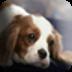 可爱小狗壁纸 工具 App LOGO-硬是要APP