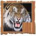 Tiger拼图 益智 App Store-愛順發玩APP
