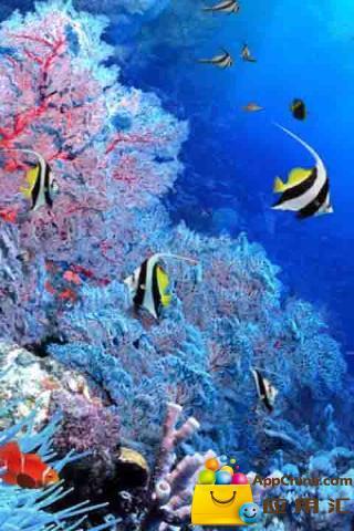3d水母动态素材
