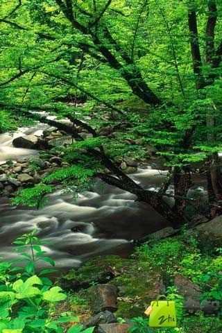 自然绿色风景下载_自然绿色风景安卓版下载