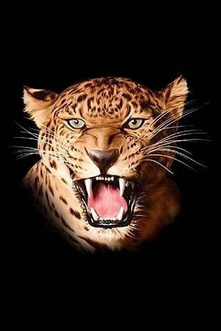 狮子和老虎壁纸下载_狮子和老虎壁纸安卓版下载