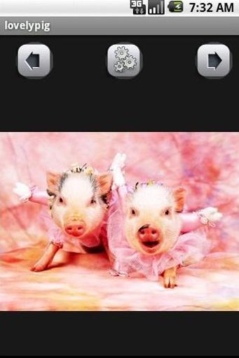 可爱的猪壁纸 截图2