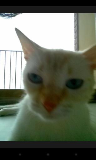 玩免費攝影APP|下載猫咪自拍 app不用錢|硬是要APP