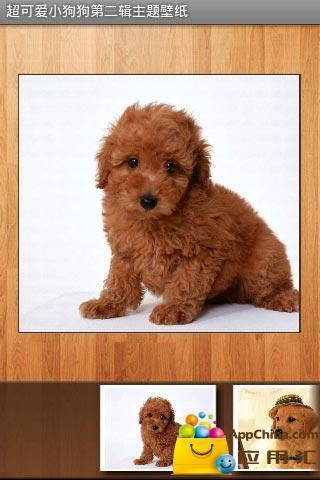 超可爱小狗狗第二辑主题壁纸