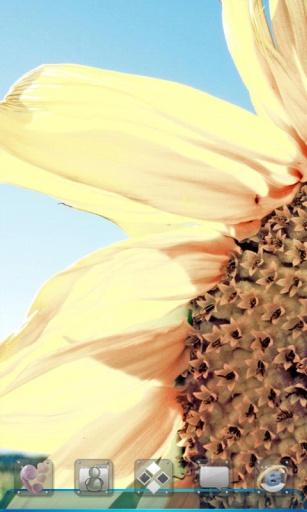 宝软桌面-向日葵