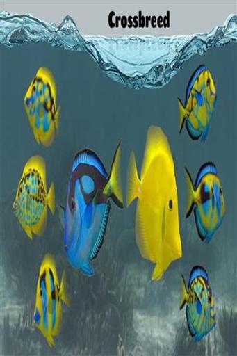 养鱼场2截图2