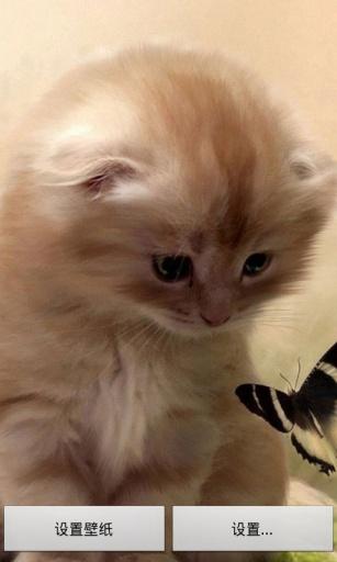可愛萌貓動態壁紙