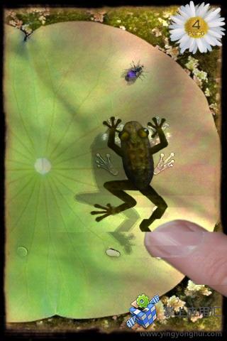 青蛙捕虫截图1