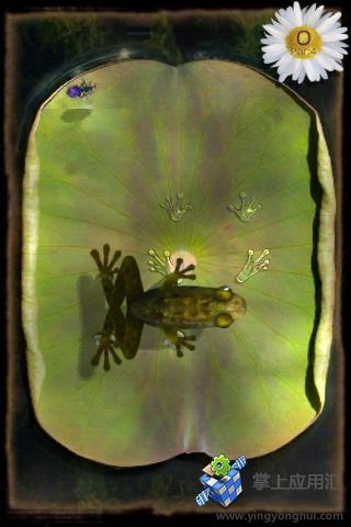 青蛙捕虫截图3