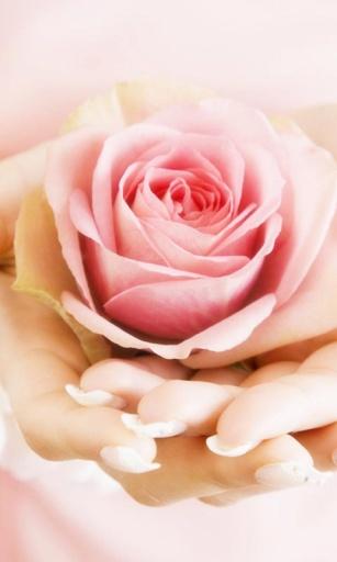 玩工具App|浪漫梦幻婚礼(桌面个性锁屏动态壁纸)免費|APP試玩