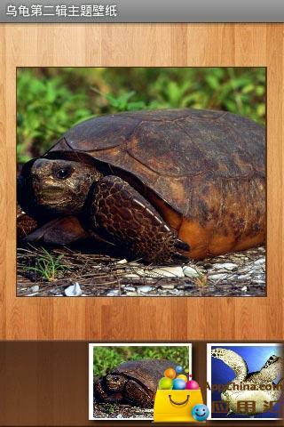 乌龟第二辑主题壁纸截图4