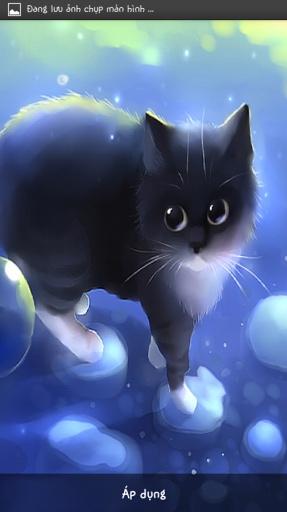 猫动态壁纸                       你爱可爱的猫与柔滑的皮毛,圆圆