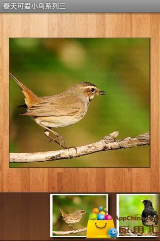 春天可爱小鸟系列三