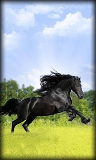 几个背景,描绘了这些可爱的动物,驰骋在绿色的草地.