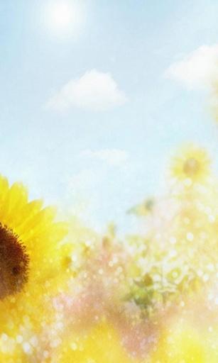 向日葵-桌面壁纸