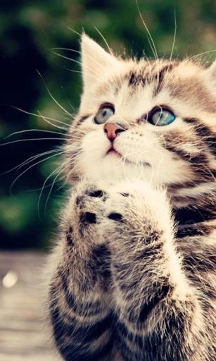 可爱的猫壁纸