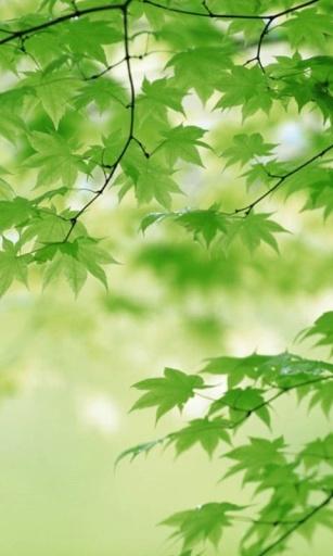 3d五彩树叶高清动态壁纸