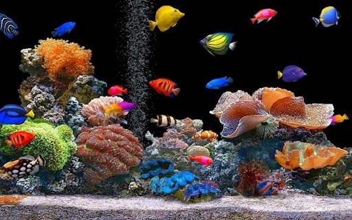 高清海底世界 - 水族館動態壁紙.- 它是免費下載和使用.