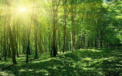 惊人的绿色,茂密的森林