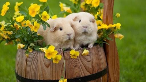 可爱的动态壁纸为您提供最可爱的小动物