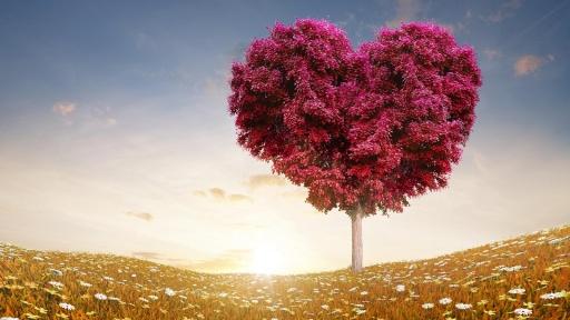 爱情树动态壁纸