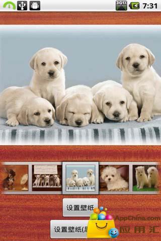 LL壁纸集之宠物狗
