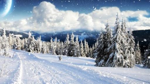 冬天的雪活壁纸