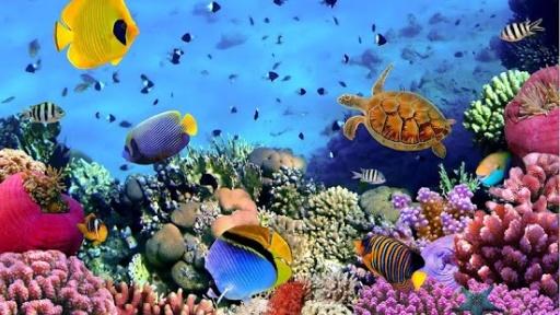 电池使用 - 兼容99%以上的移动电话设备。 - 墙纸应用程序将睡觉的时候你的手机是无效的,所以这个活的壁纸不会耗尽你的电池。 - 海洋鱼生活背景完全支持水平方向和两个手机和平板设备看起来惊人。这些神奇的海洋动物会激发你与他们不同的颜色,大小,形状奇妙鳍和鳍状肢和不寻常的特性。他们有一个专门的机构称为鳃,使他们在水下呼吸。而且有这么多不同种类的鱼:神仙鱼,汤,海马,鯭, Percula小丑(或尼莫由知名动画电影) ,狮子鱼,虾虎鱼.