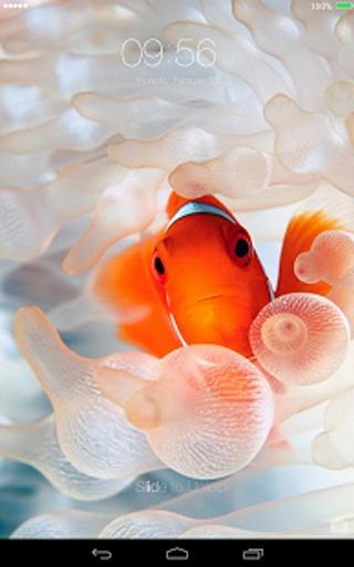 含有惊人的**海底水族馆锁屏**高清壁纸为你装饰你的