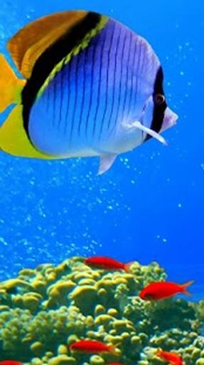 3d海洋鱼高清动态壁纸图片