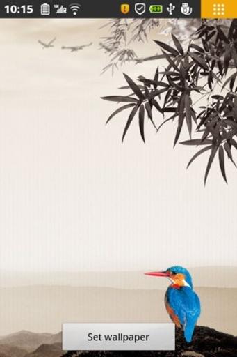 竹海鹦鹉动态壁纸