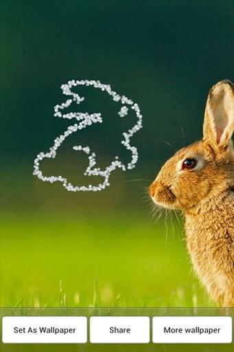 钻石兔动态壁纸