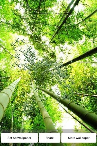 竹叶飘落动态壁纸 個人化 App-愛順發玩APP