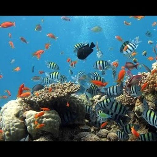 水族馆视频下载_水族馆视频安卓版下载