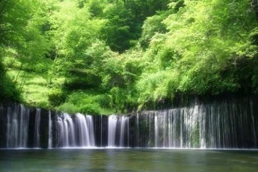 这个程序是美丽的森林自然风景动态壁纸,展现最佳的自然森林景观与