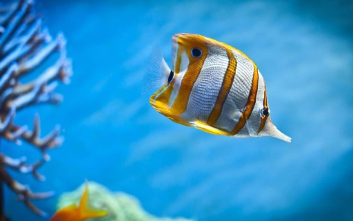 ios 7 - 海底世界