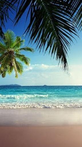 海滩 桌面皮肤 超清
