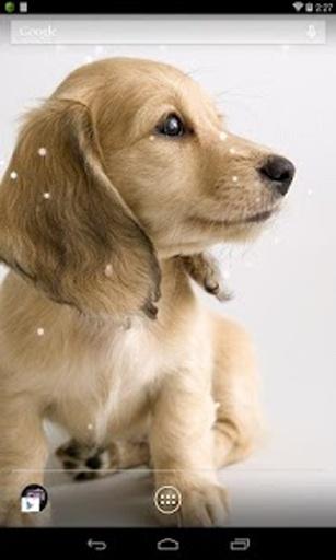 腊肠狗狗动态壁纸 高清