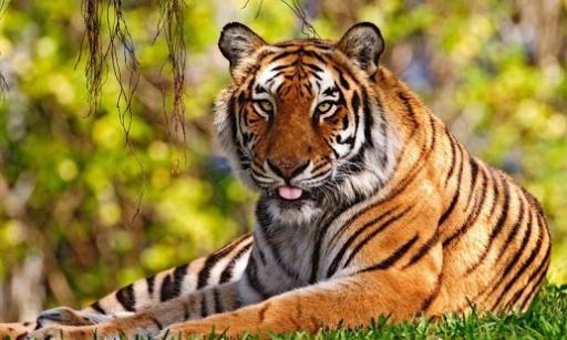 有关老虎的电影